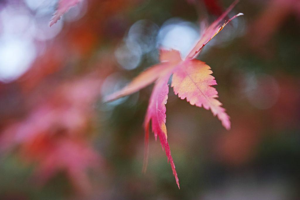 Nagatoro Fall Foliage Festival 2018紅葉スポット